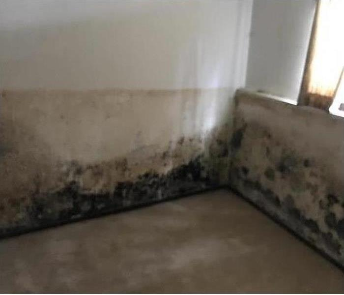 Dark, water stained moldy basement walls