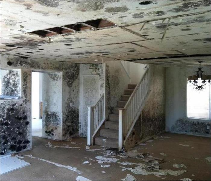 Interior space, walls and ceiling covered in mold